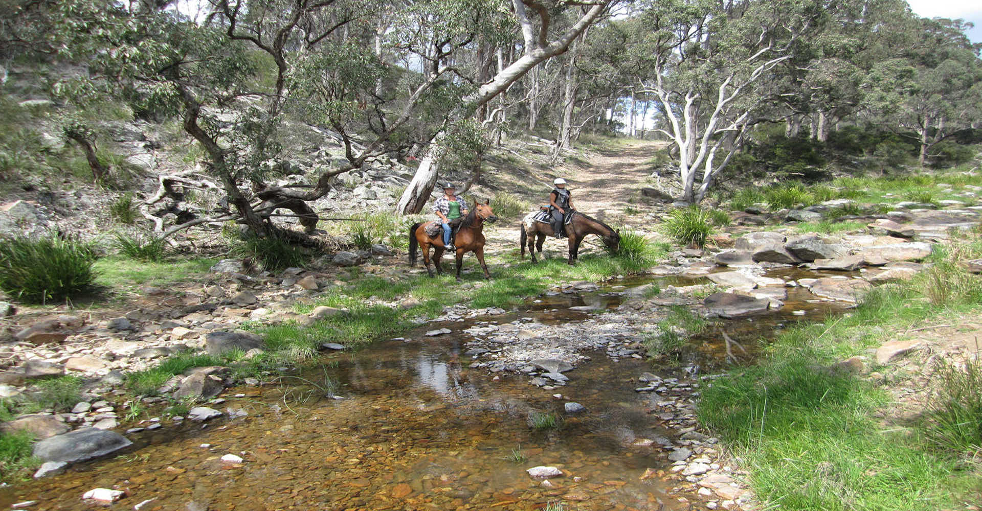 Horse Riding at Three Waters High Country Holidays